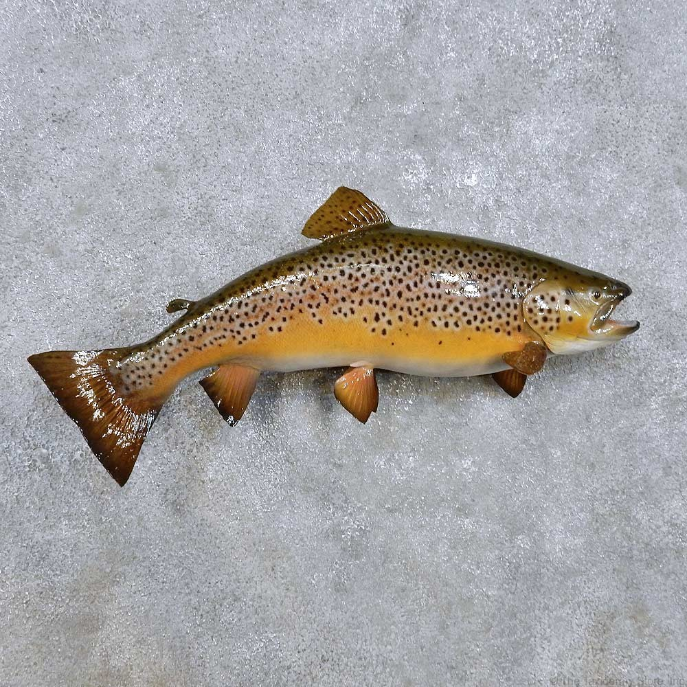 Brown trout fish mount for sale 14214 the taxidermy store for Fish mounts for sale