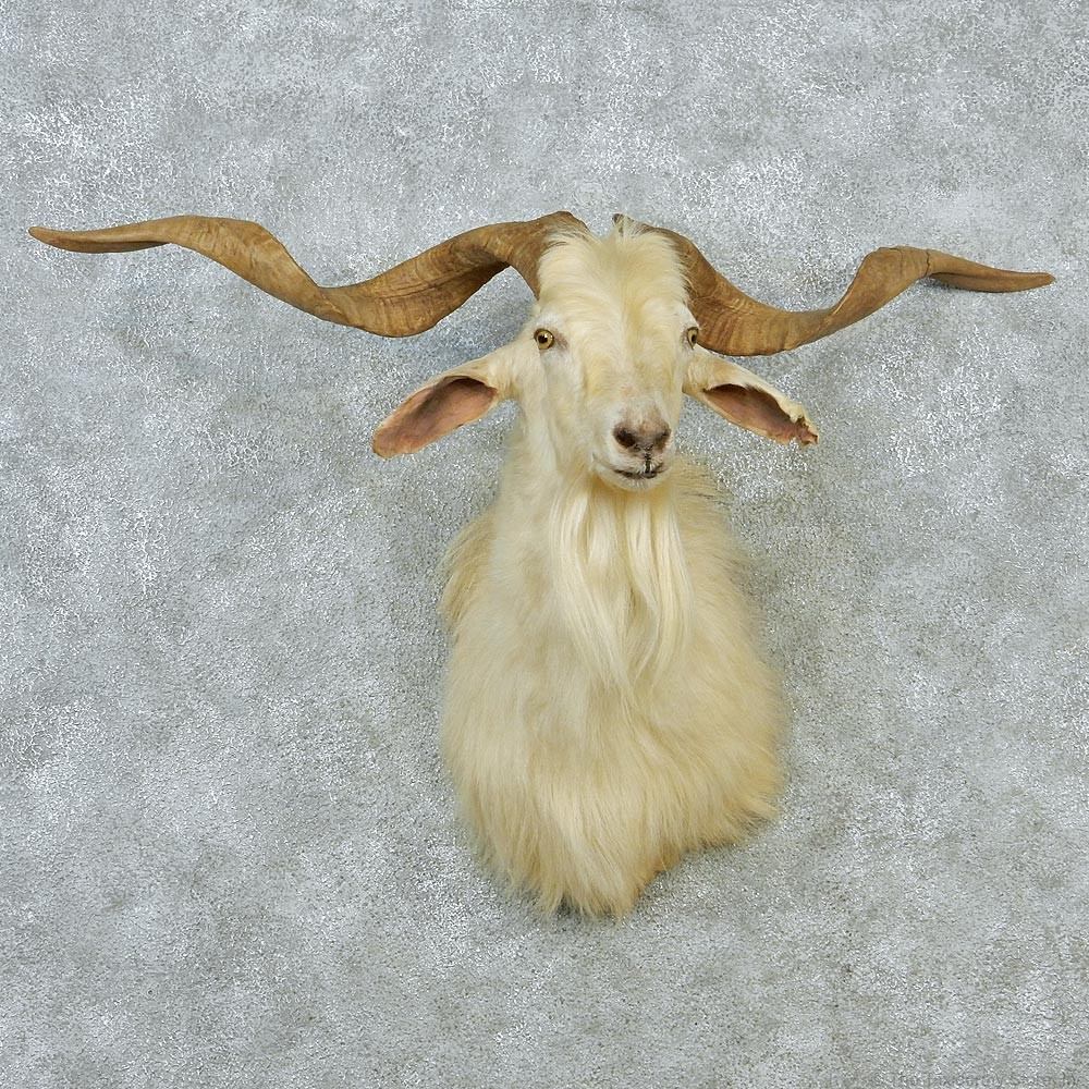 White Catalina Goat Mount #12851 - The Taxidermy Store
