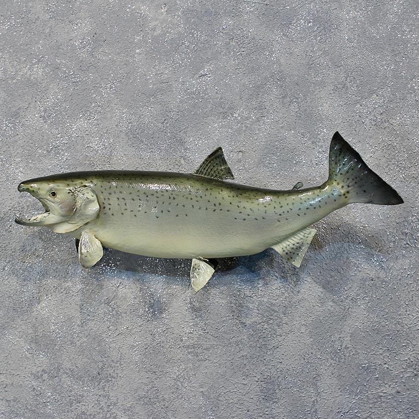 Pin fish mount 39 taxidermy replica wood carving sculpture for Fish mounts for sale