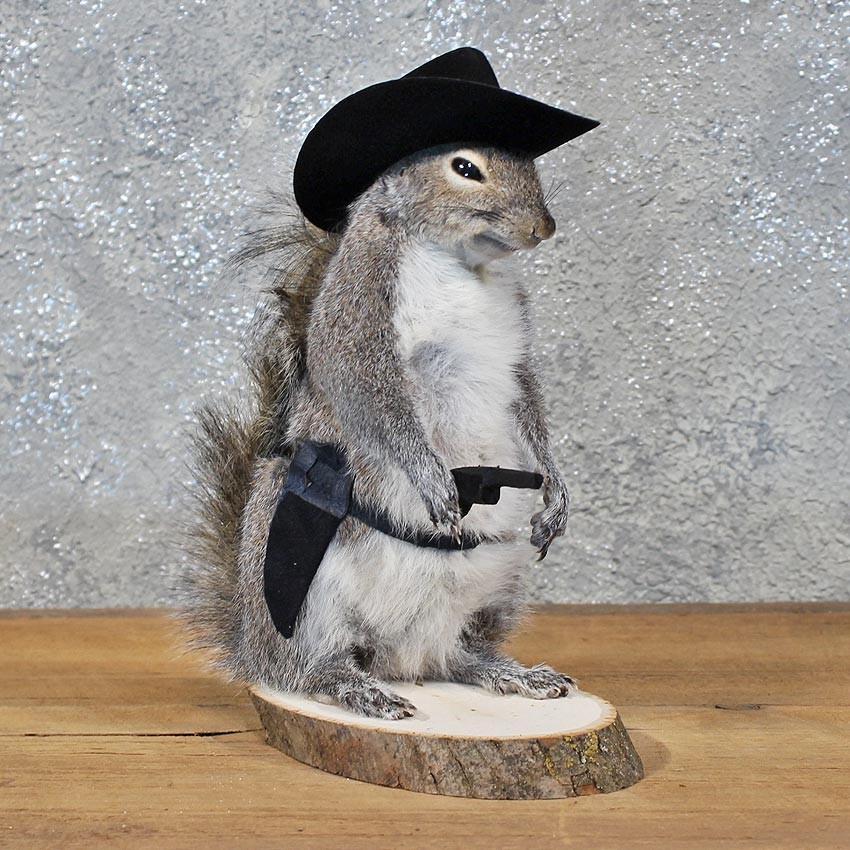 Novelty Cowboy Grey Squirrel  11918 For Sale   The Taxidermy Store 4593ffab523