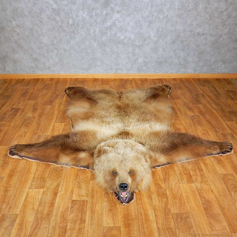sale brown mounted the for bear head rug store mount taxidermy with