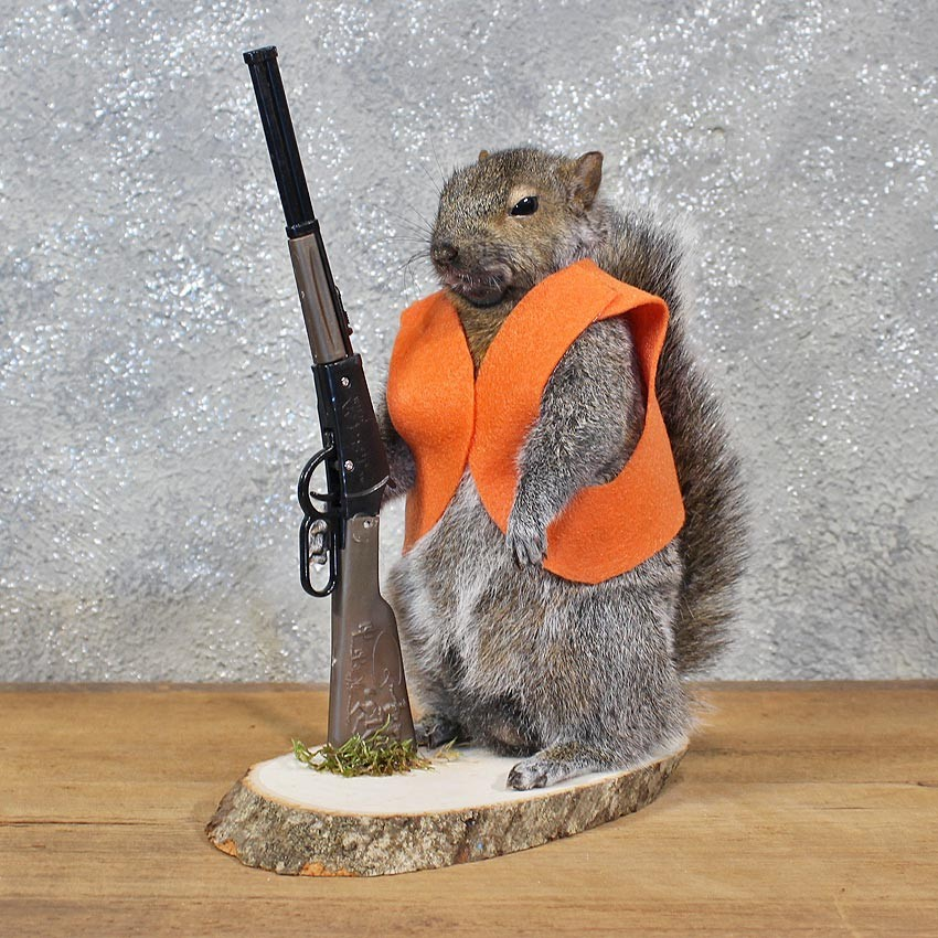 Novelty Hunter Grey Squirrel 11940 The Taxidermy Store