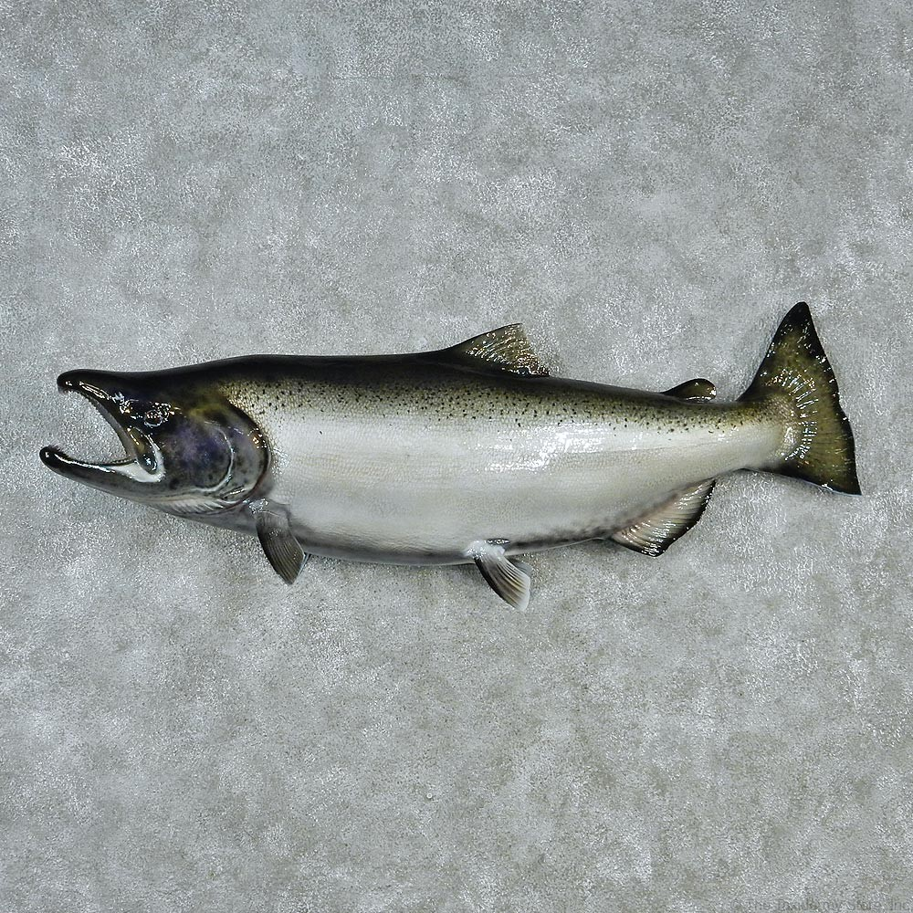 King salmon mount for sale 12838 the taxidermy store for Fish mounts for sale