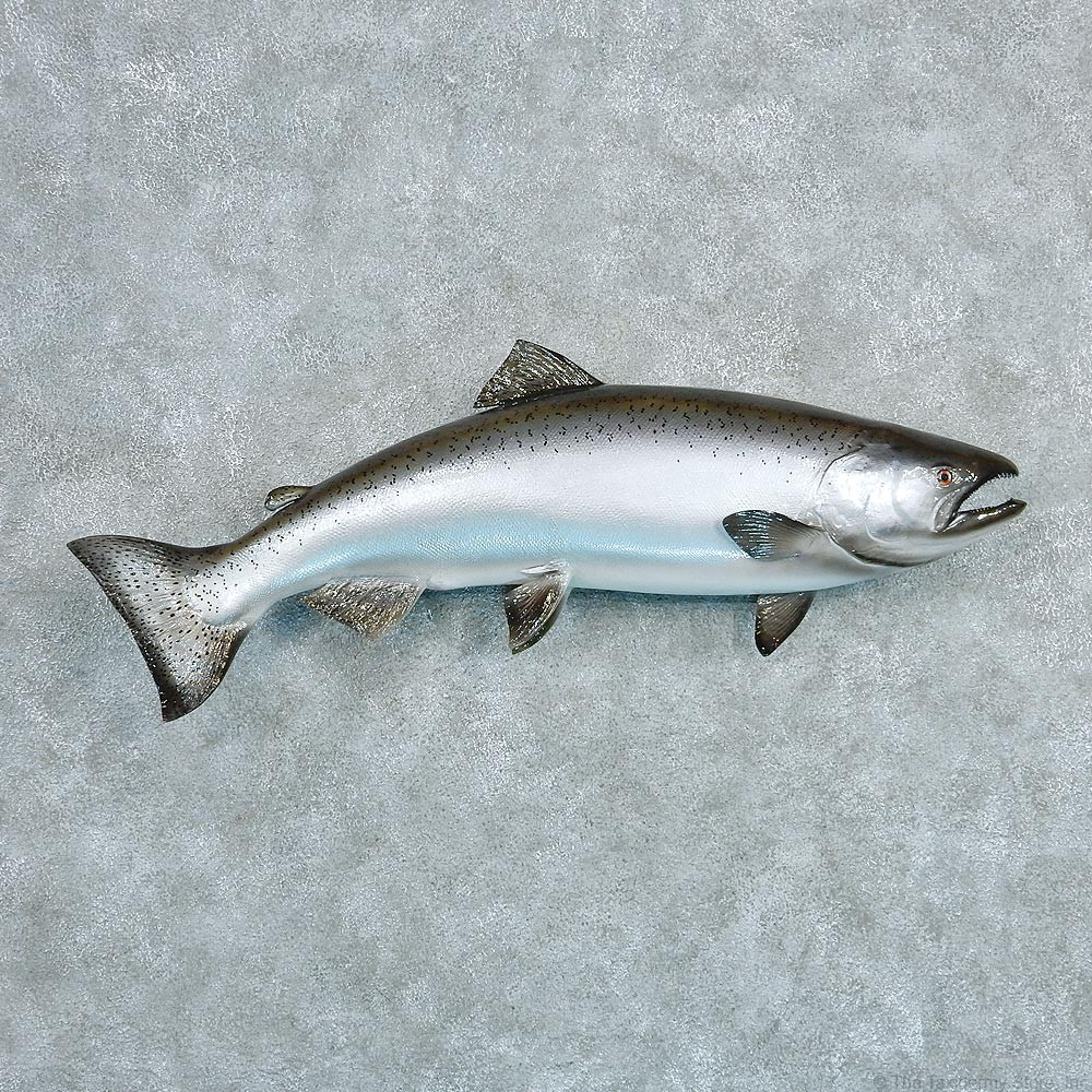 King salmon mount for sale 12796 the taxidermy store for How to taxidermy a fish