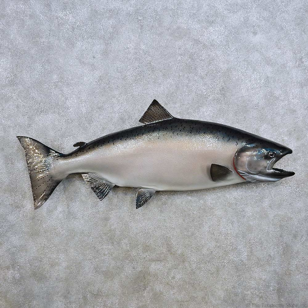 King salmon fish mount for sale 14367 the taxidermy store for Fish mounts for sale