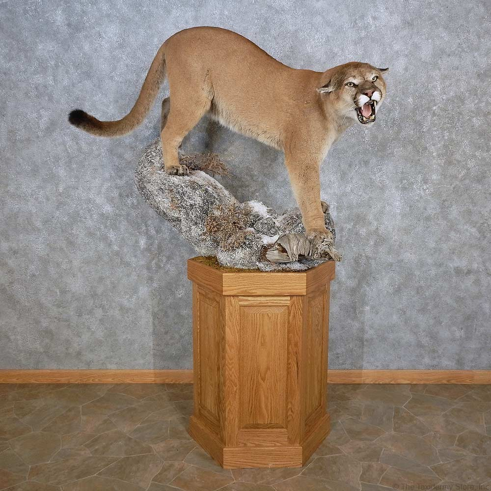 lodge deer collections sale pedestal taxidermy furnishings whitetail products new item mount