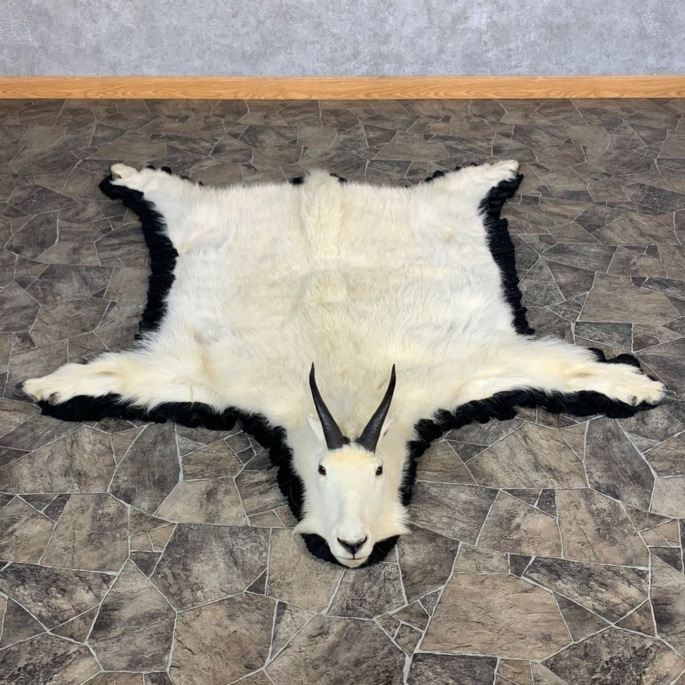 Mountain Goat Full-Size Taxidermy Rug