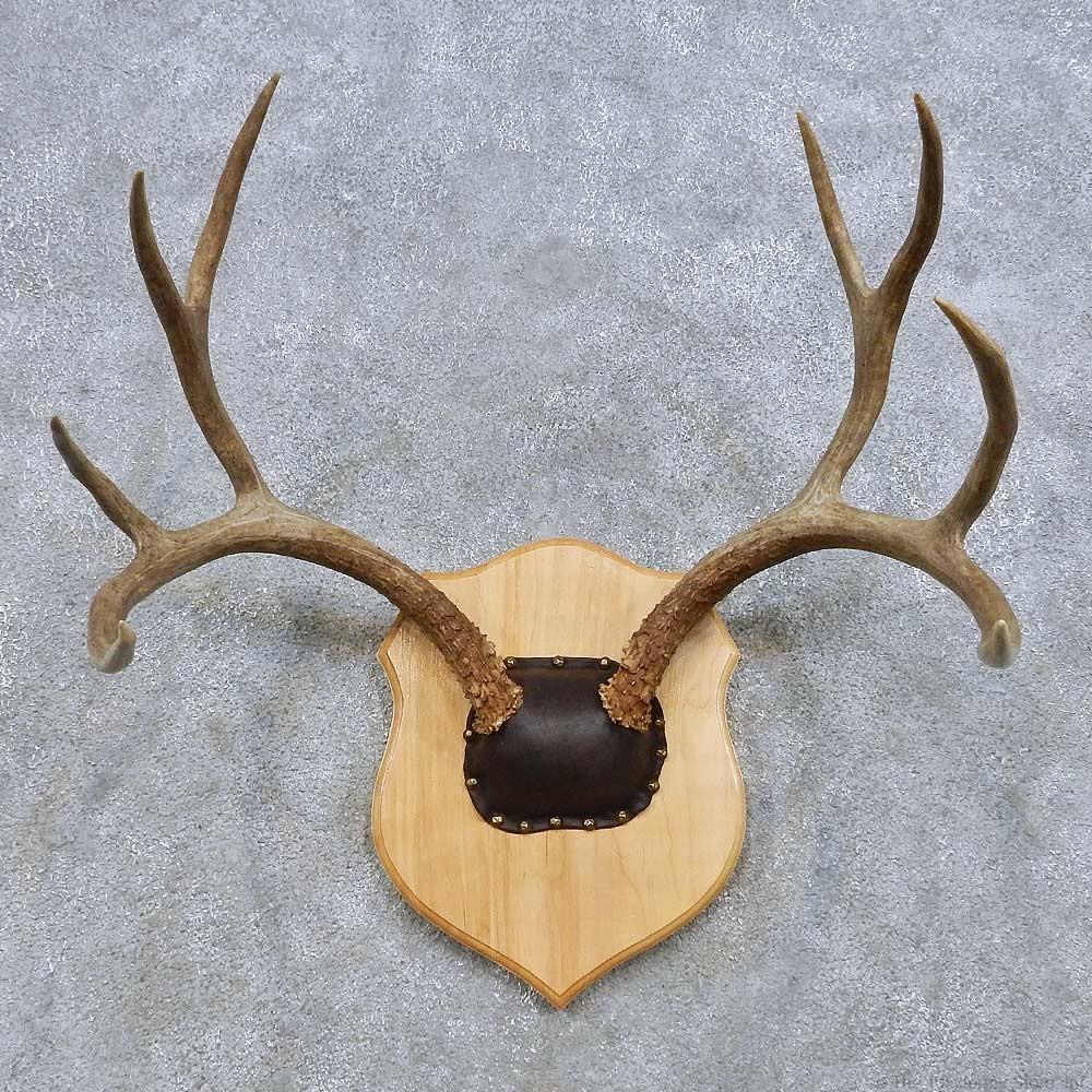 Mule Deer Antler Plaque Mount For Sale 14655 The