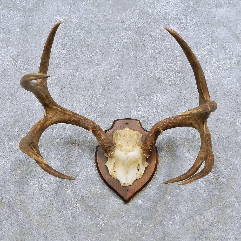 Mule Deer Antler Plaque Mount For Sale #14496 - The ...