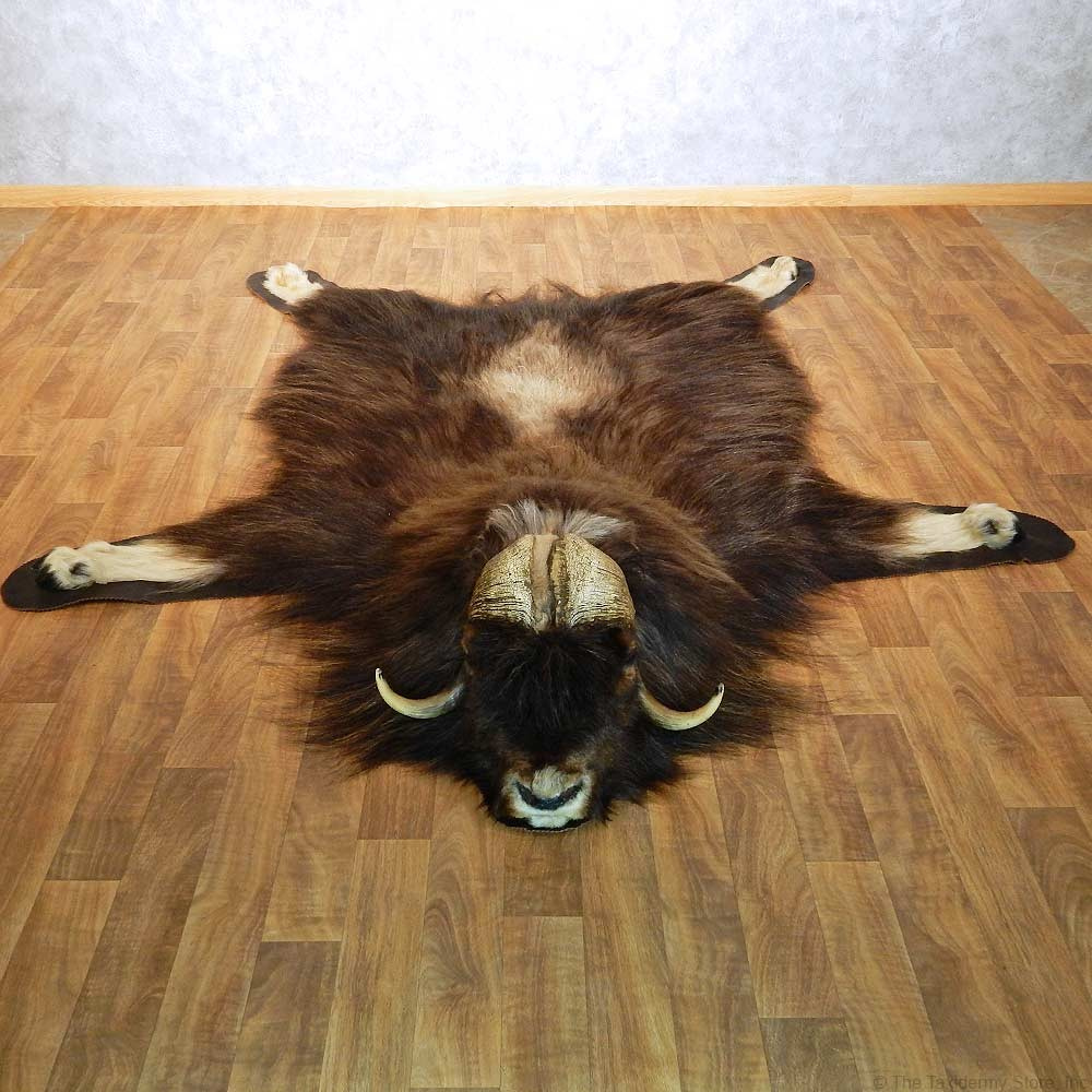 North American Muskox Rug For Sale #14583