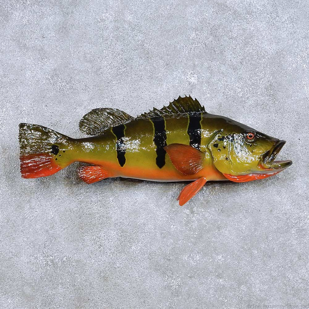 Peacock bass reproduction mount for sale 14095 the for Bass fish for sale