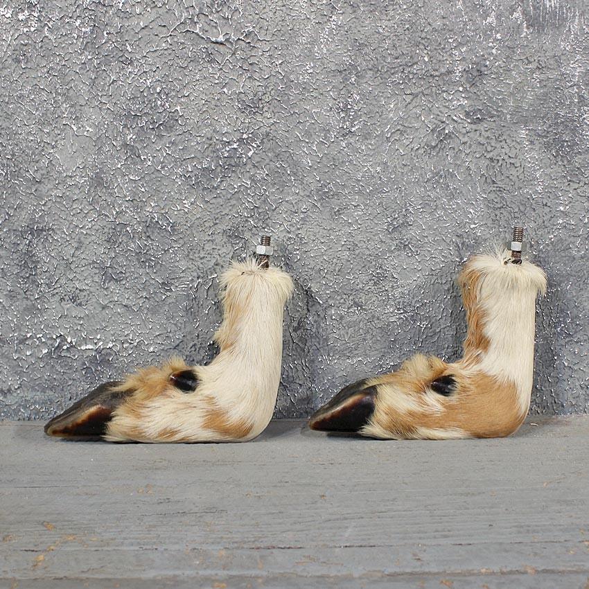 Piebald Whitetail Deer Feet #11616