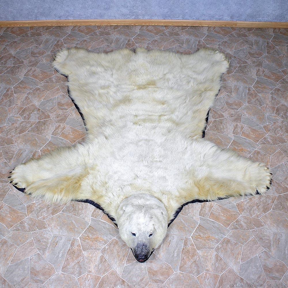 Polar Bear Taxidermy Rug For