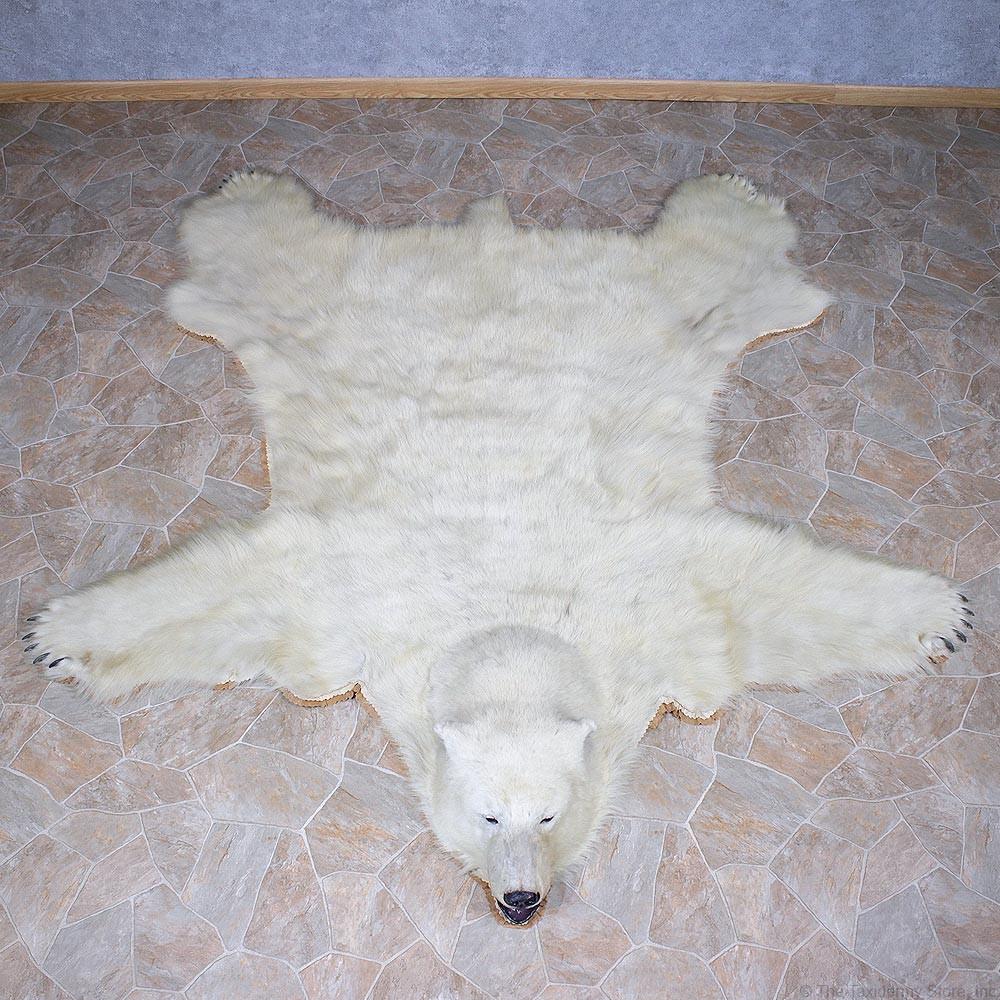 Polar Bear Taxidermy Rug Mount For Sale #11056