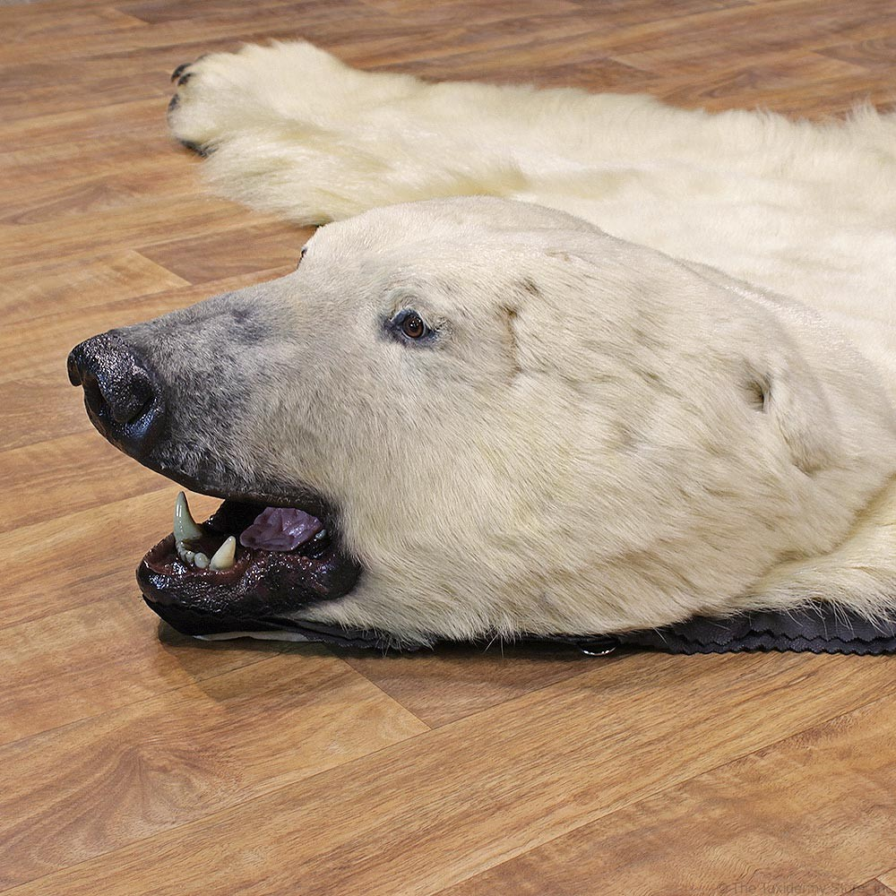 Polar Bear Taxidermy Rug For Sale #12330