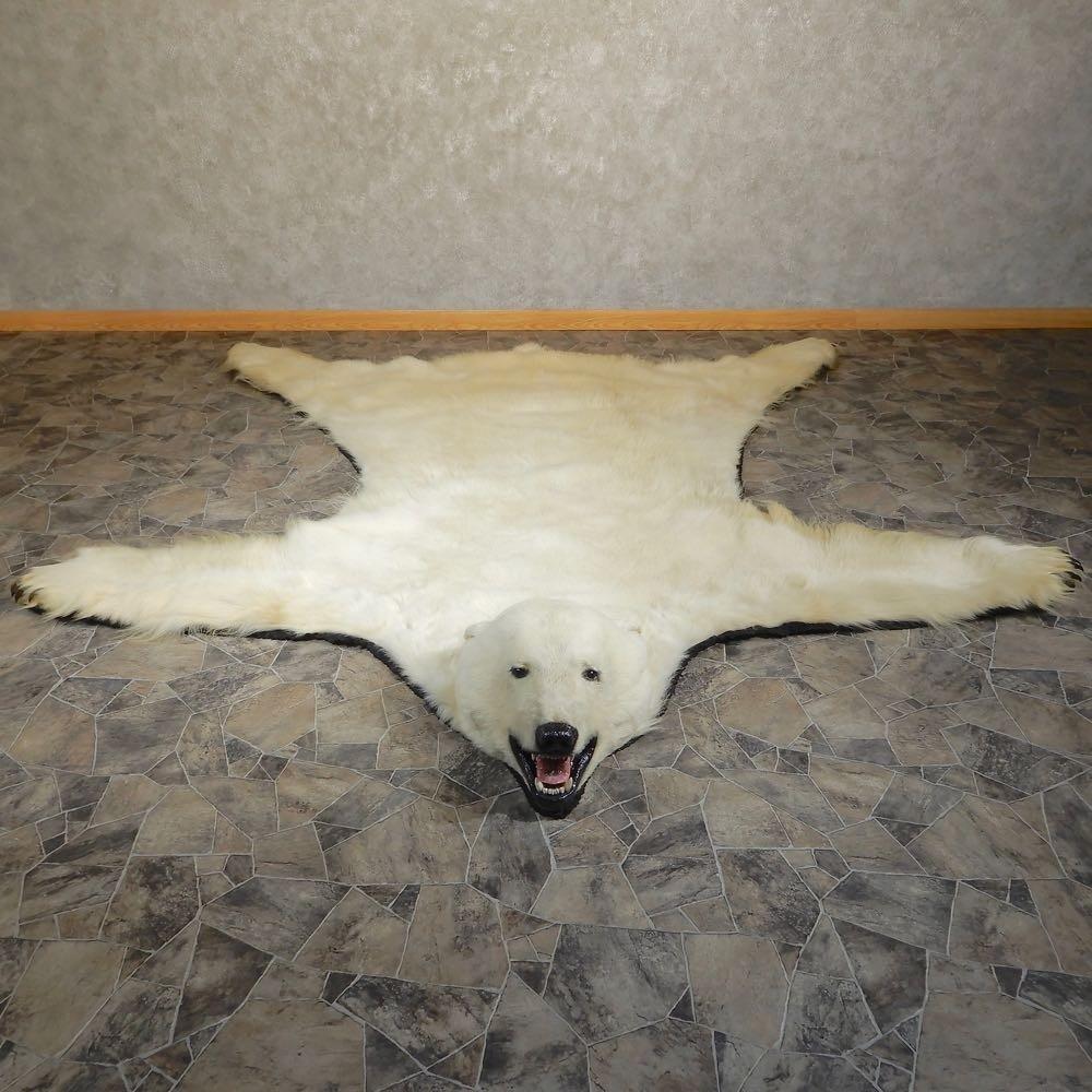 Polar Bear Taxidermy Rug For Sale