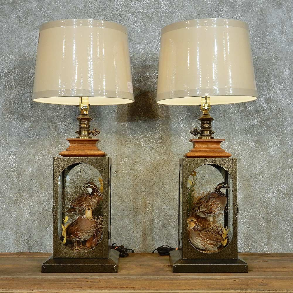 quail lamp life size taxidermy bird mount pair 13516 for sale the. Black Bedroom Furniture Sets. Home Design Ideas