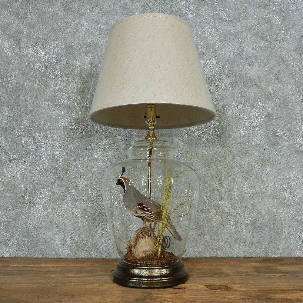 quail lamp life size taxidermy bird mount 13518 for sale the. Black Bedroom Furniture Sets. Home Design Ideas