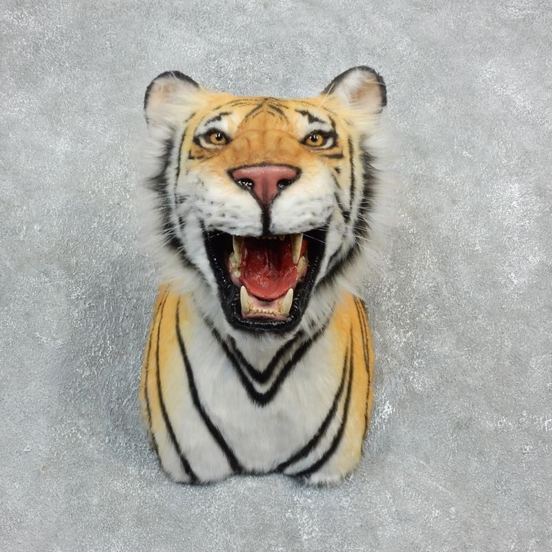 Taxidermy Tiger Rug For Sale: Reproduction Bengal Tiger Shoulder Mount #18300