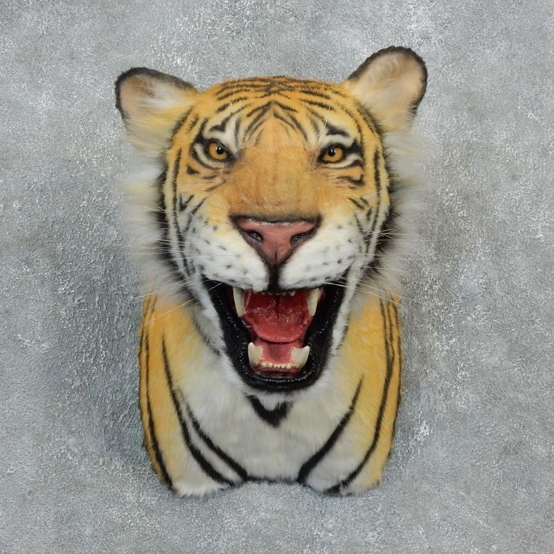Taxidermy Tiger Rug For Sale: Reproduction Bengal Tiger Shoulder Mount #18301