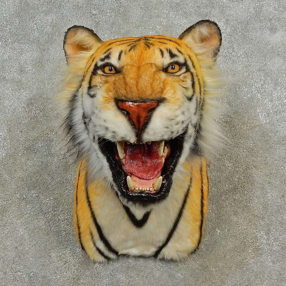 Taxidermy Tiger Rug For Sale: Reproduction Bengal Tiger Shoulder Mount #16601