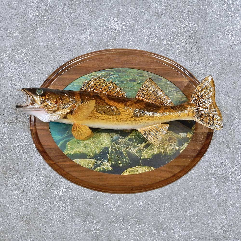 Crappie fish mount for sale 17707 the taxidermy store for Freshwater fish stores