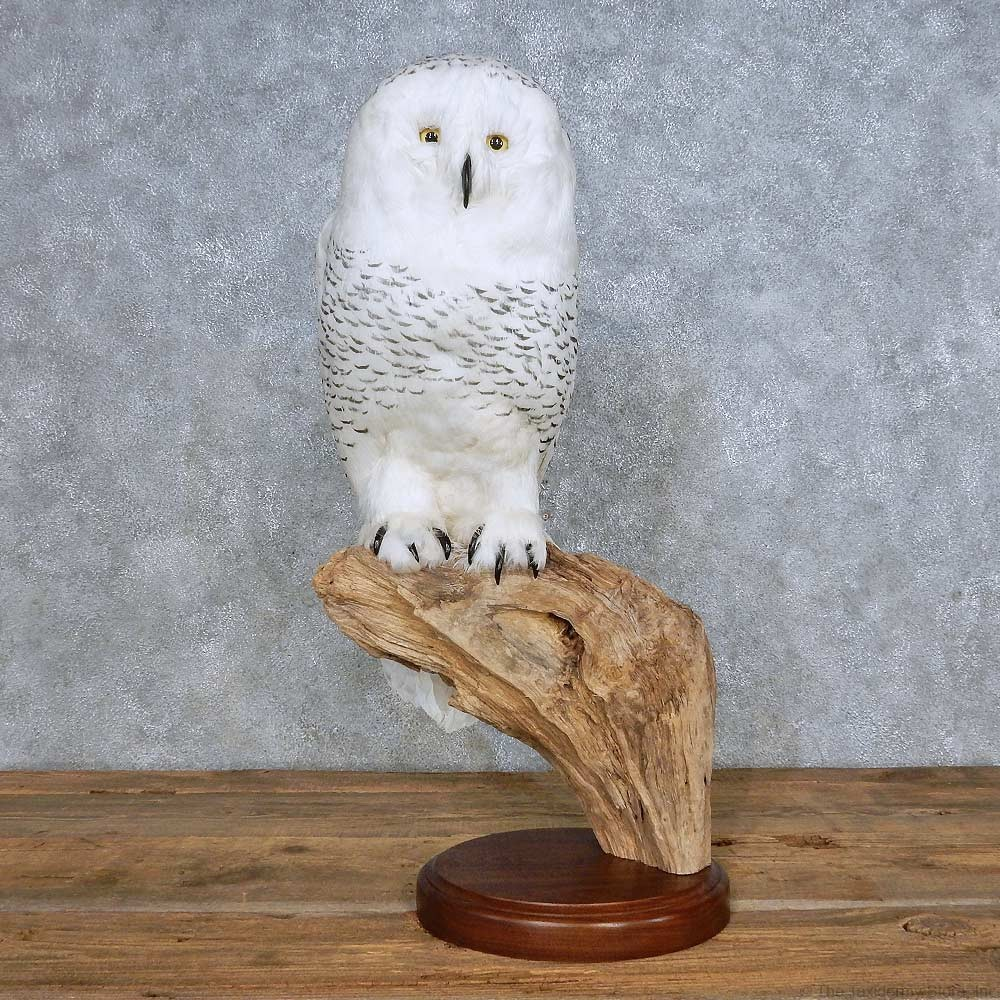 Reproduction Snow Owl Mount For Sale 14716 The