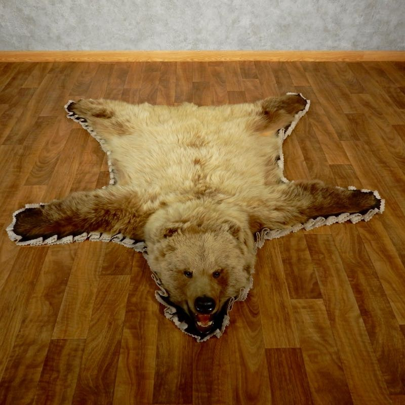 Toklat Grizzly Bear Taxidermy Rug Mount For Sale #17499 @ The Taxidermy  Store