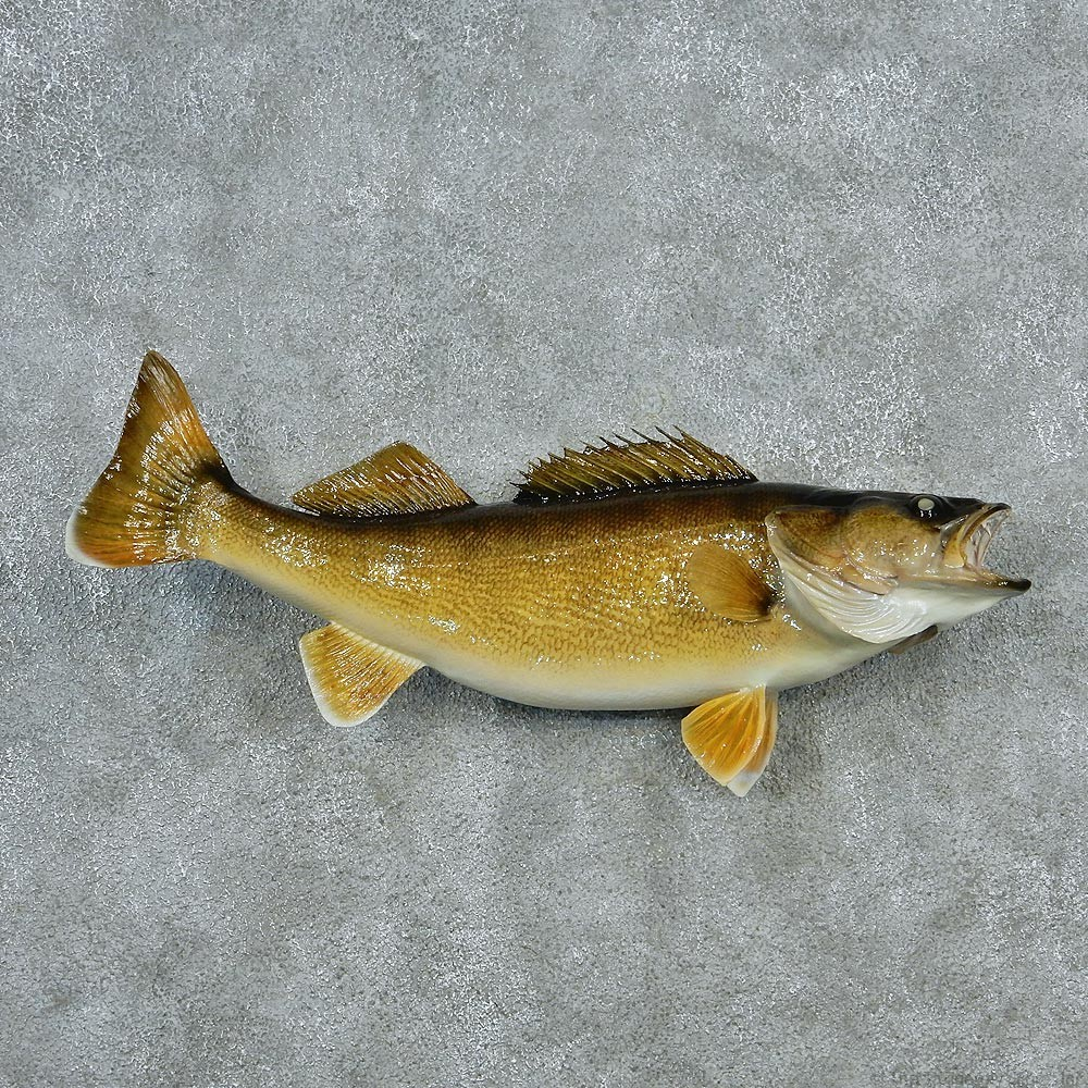 Walleye fish mount for sale 12791 the taxidermy store for Wall eye fish