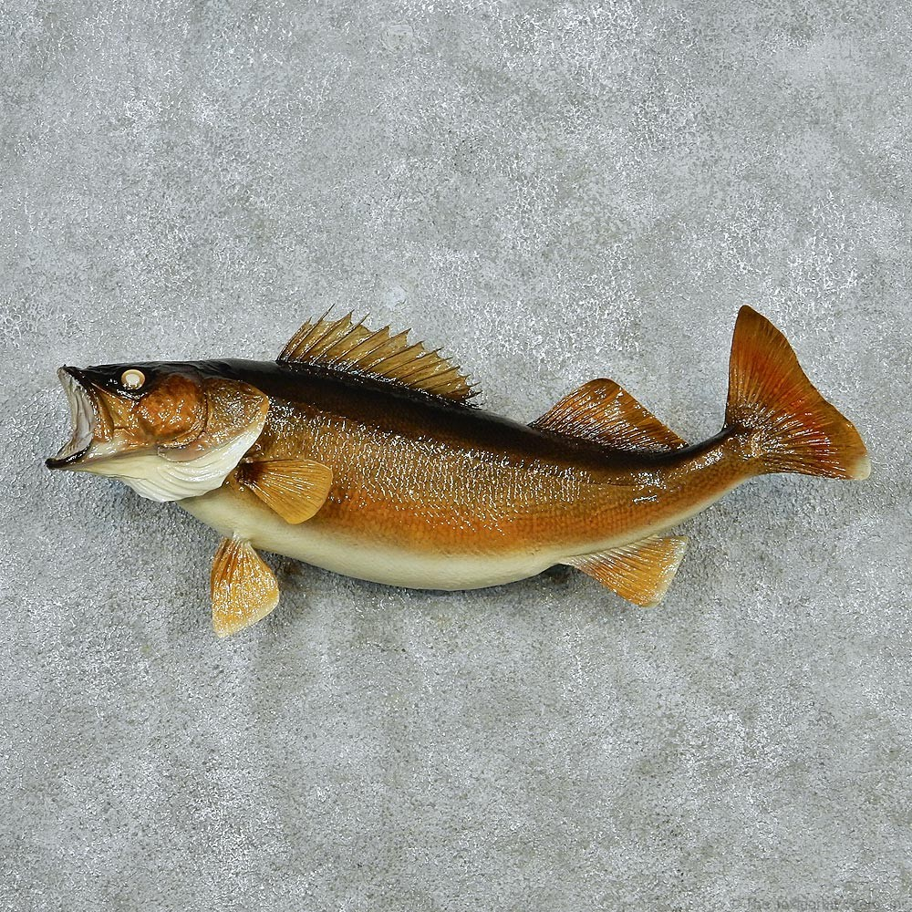 Walleye pike fish mount 12826 the taxidermy store for Fish mounts for sale