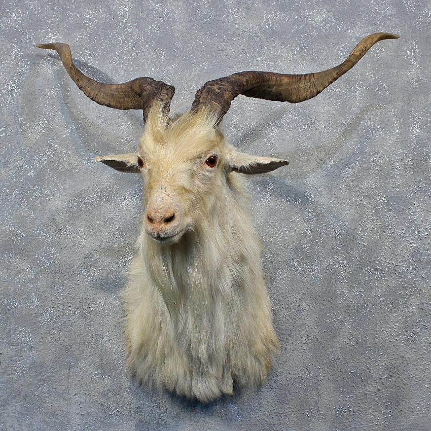 Horned sheep of Devon 6 letters  Mystic Words Answers and