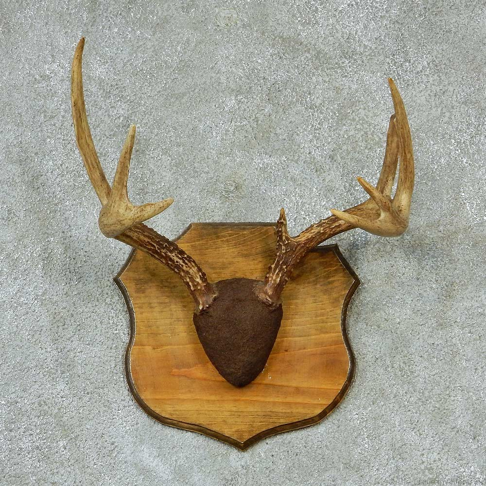 Whitetail Deer Taxidermy Antler Plaque For Sale