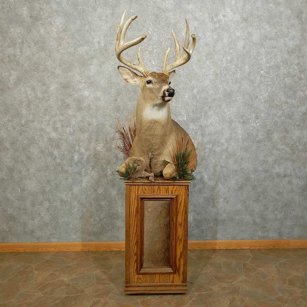 whitetail deer 12 life size mount for sale 15861 the taxidermy - Reindeer Images 2