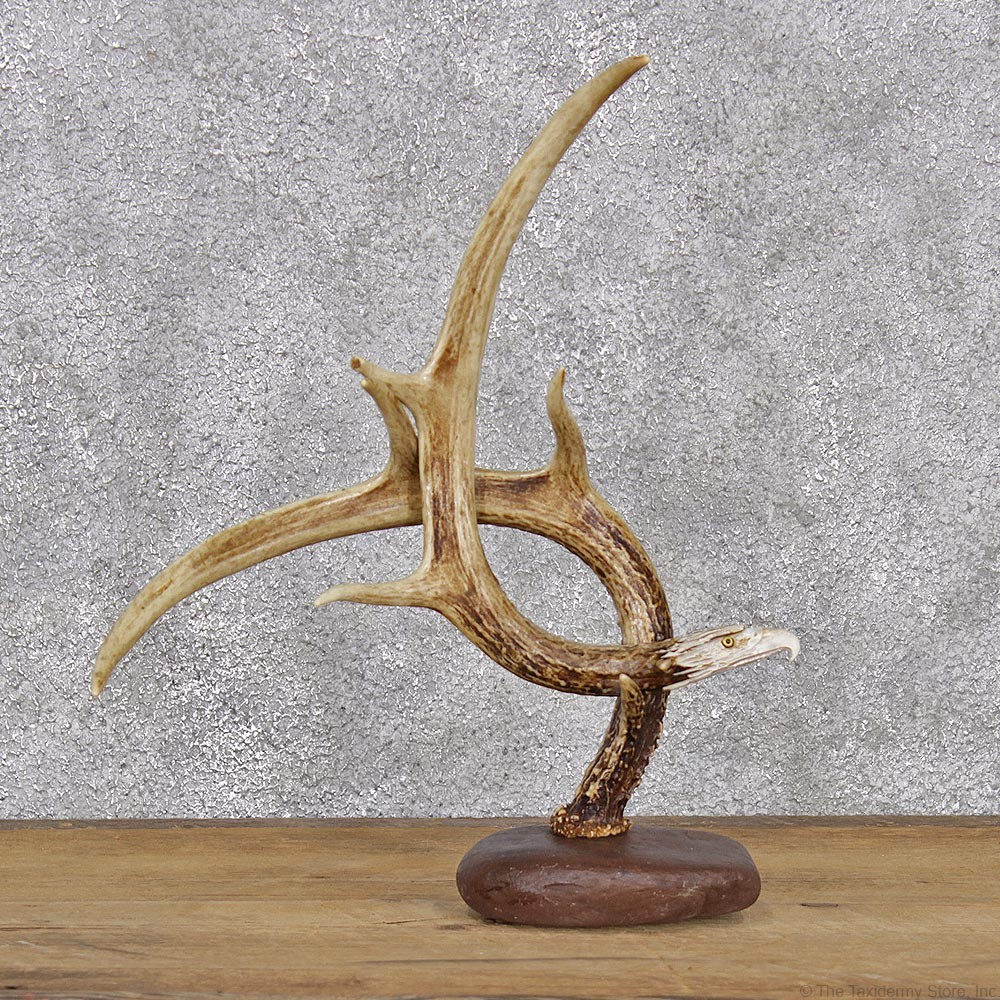 Eagle Head Carving On A Whitetail Antler Decor For Sale