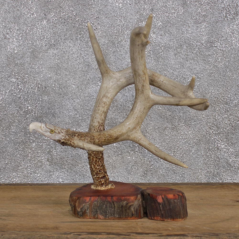 Eagle carving on a pair of whitetail antlers for sale