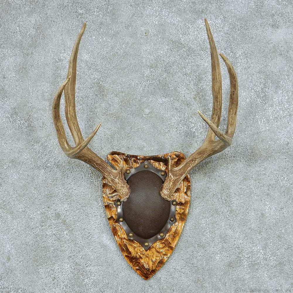 Mule deer antler plaque mount 13770 for sale the taxidermy store