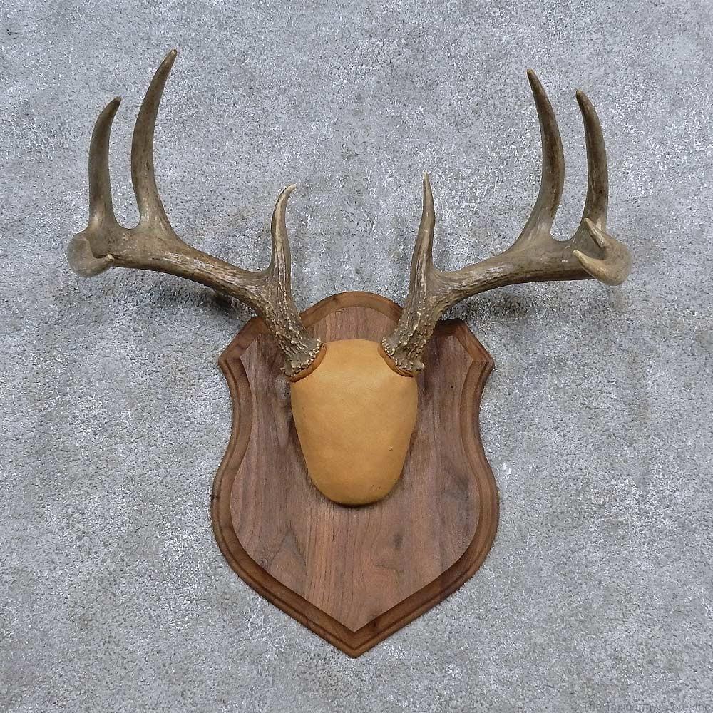 Deer antler products