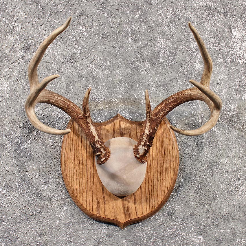 Deer antler plaque taxidermy mount 11528 for sale the taxidermy