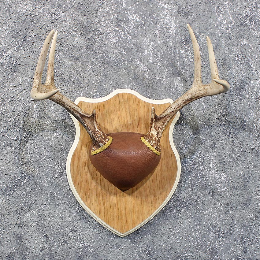 Whitetail Deer Antler Plaque #11804 - The Taxidermy Store