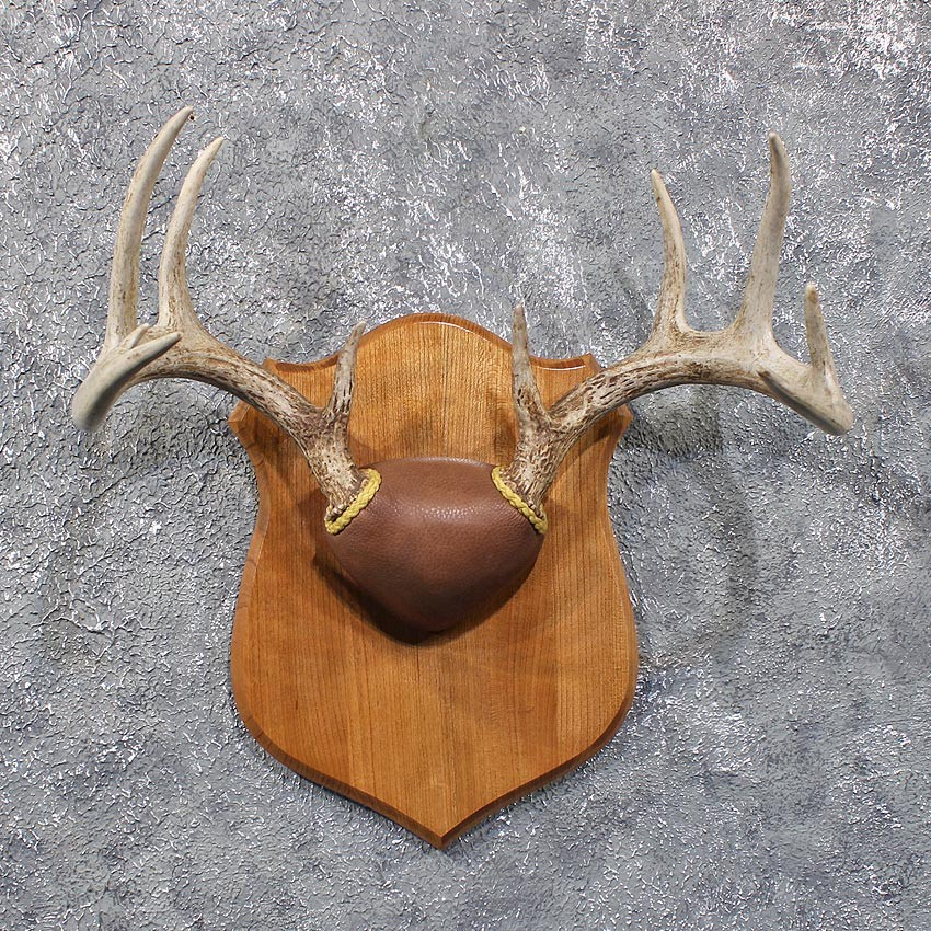 Whitetail Deer Antler Plaque 11806 For Sale The Taxidermy Store