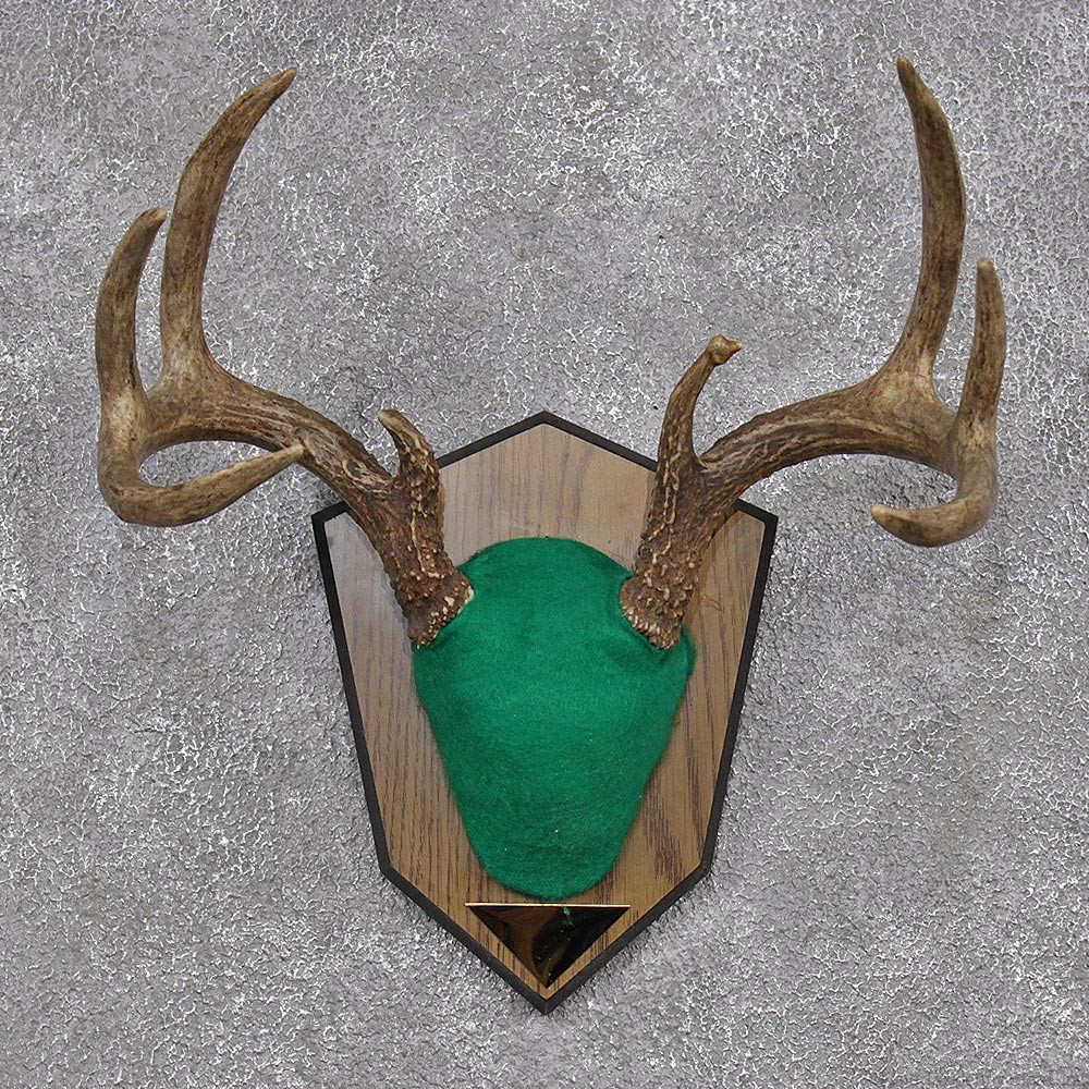 Whitetail Deer Antler Plaque #12426 - The Taxidermy Store