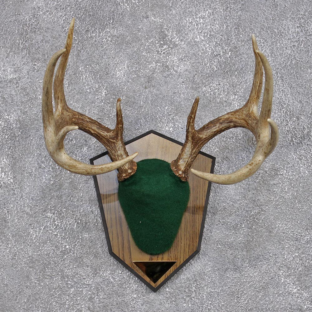 Whitetail Deer Antler Plaque #12428 - The Taxidermy Store