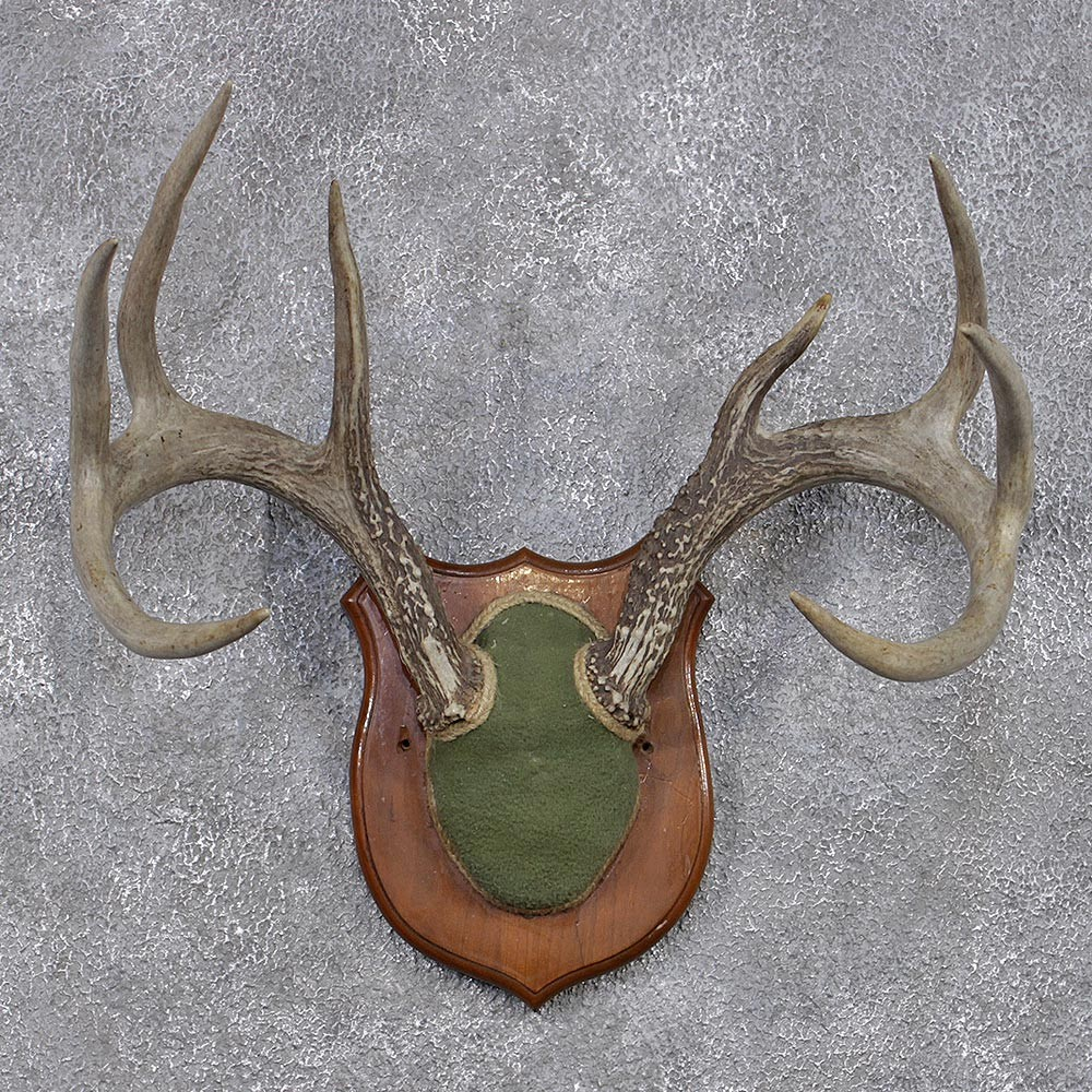 Whitetail Deer Antler Plaque #12435 - The Taxidermy Store