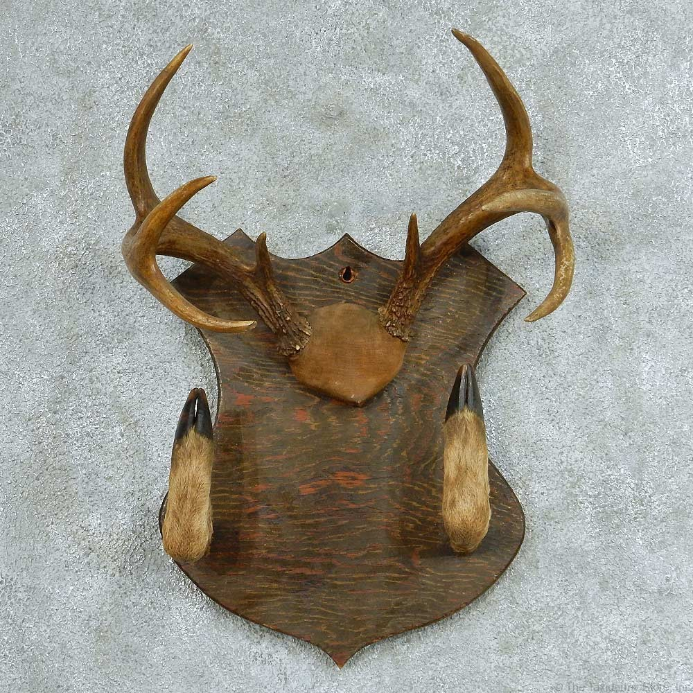 Whitetail Deer Antlers Gun Rack For Sale 13320 The