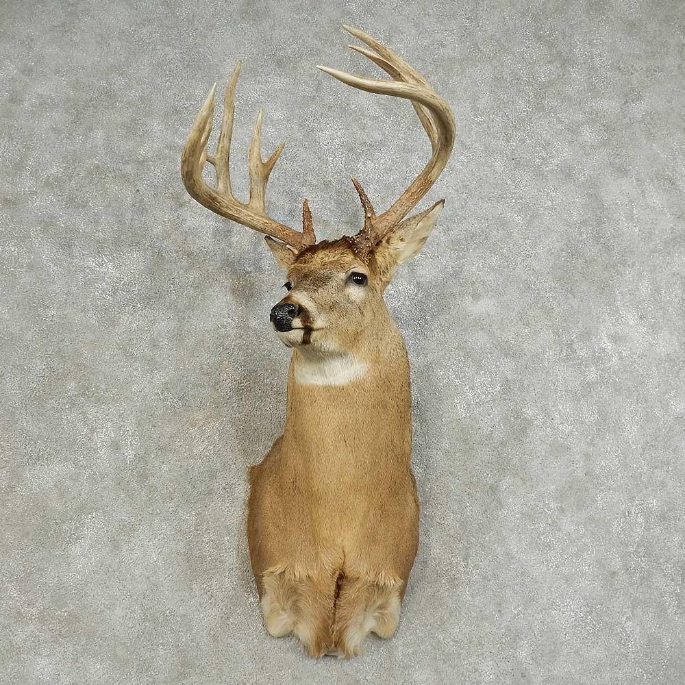 Whitetail Deer Shoulder Mount For Sale #15875