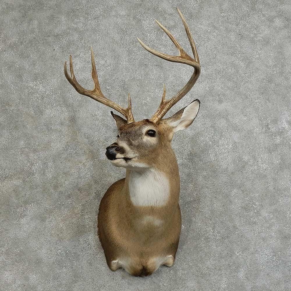 Whitetail Deer Shoulder Mount For Sale 16077 The
