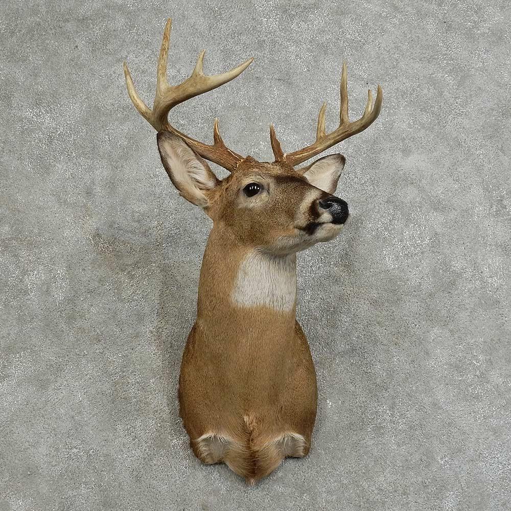 Whitetail Deer Shoulder Mount For Sale #16081