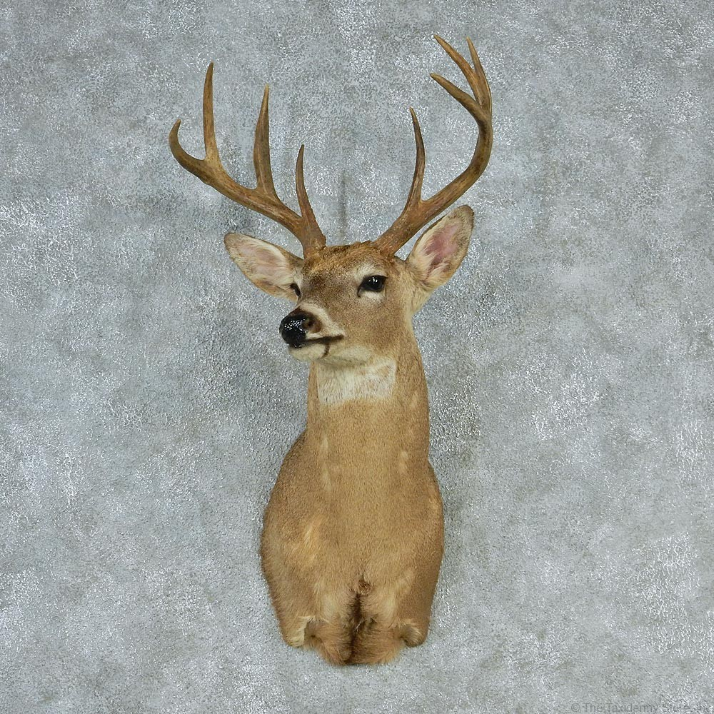 deer head mounts for sale car interior design. Black Bedroom Furniture Sets. Home Design Ideas