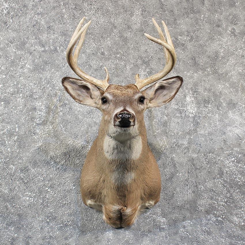 Image Gallery Taxidermy Deer