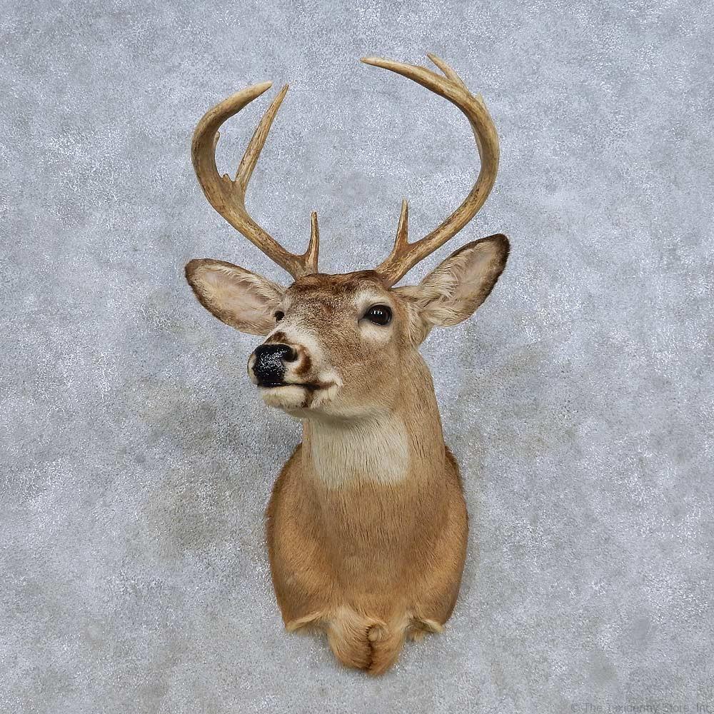 Whitetail Deer Shoulder Mount For Sale 14319 The